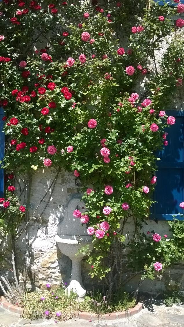 Rose in facciata (2)