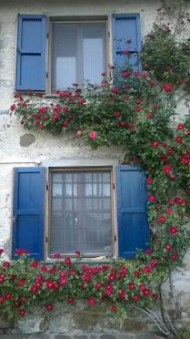 Rose in facciata (3)