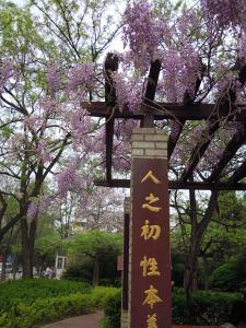 Pechino (4)